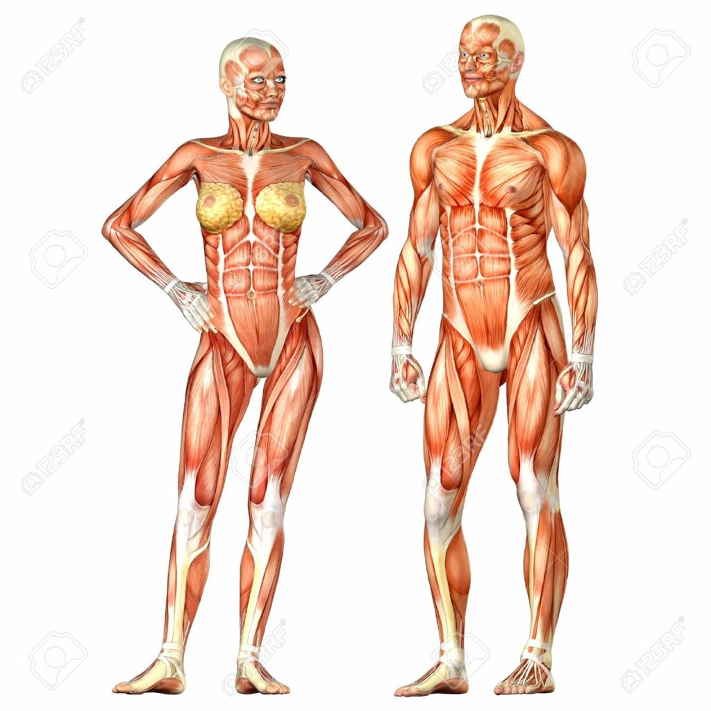 12331983-Illustration-of-a-male-and-female-human-anatomy-characters-isolated--Stock-Photo